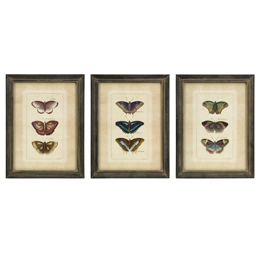 Wall Decor Set Of 3 : Imax butterfly collection wall art set of
