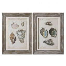 Vintage Shell Study Framed Art