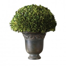 Globe Preserved Boxwood 60092