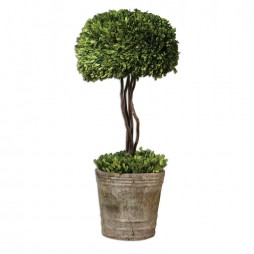 Tree Topiary Preserved Boxwood 60095