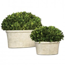 Oval Domes Preserved Boxwood Set/2 60107