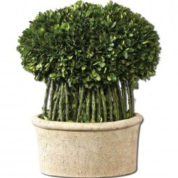 Willow Topiary Preserved Boxwood 60108