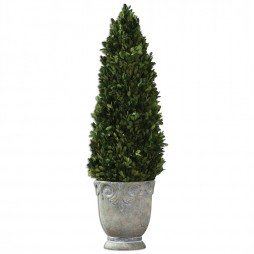 Boxwood Cone Topiary 60111